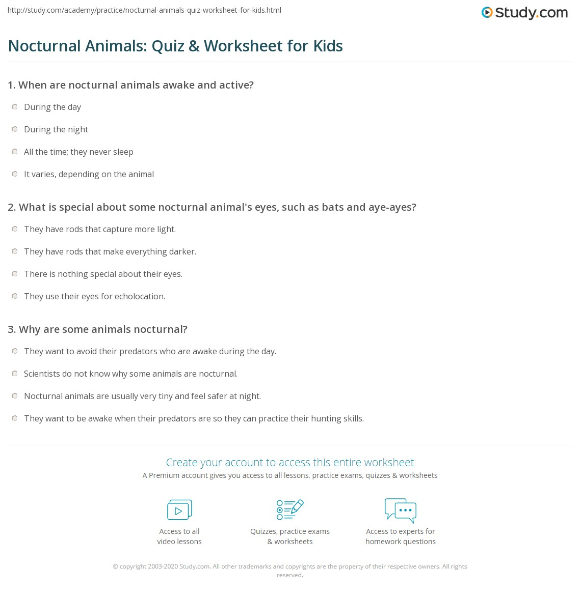 Nocturnal Animals Quiz Amp Worksheet For Kids