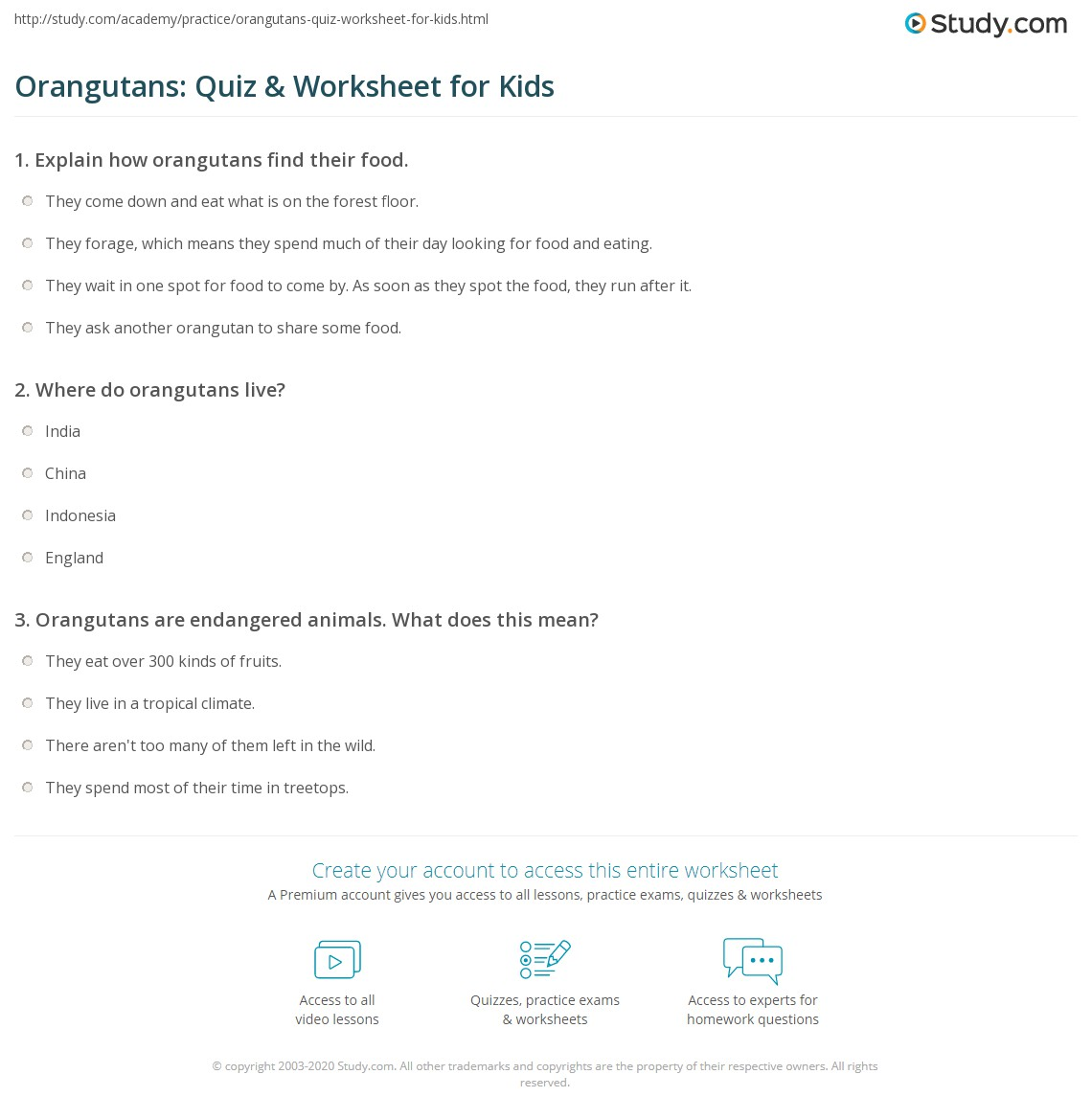 Orangutans Quiz Amp Worksheet For Kids