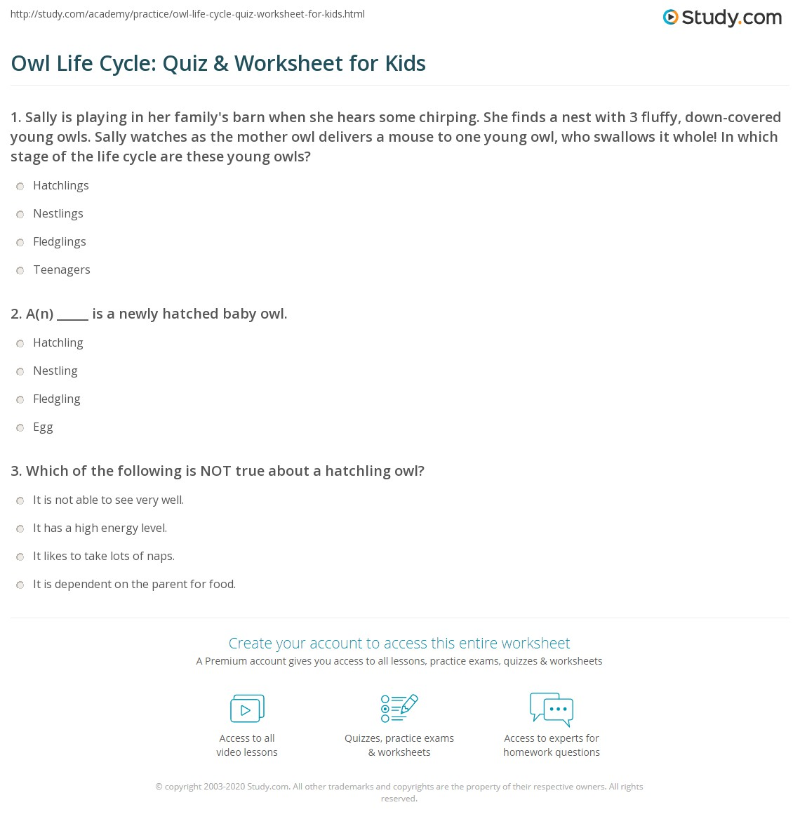 Owl Life Cycle Quiz Amp Worksheet For Kids