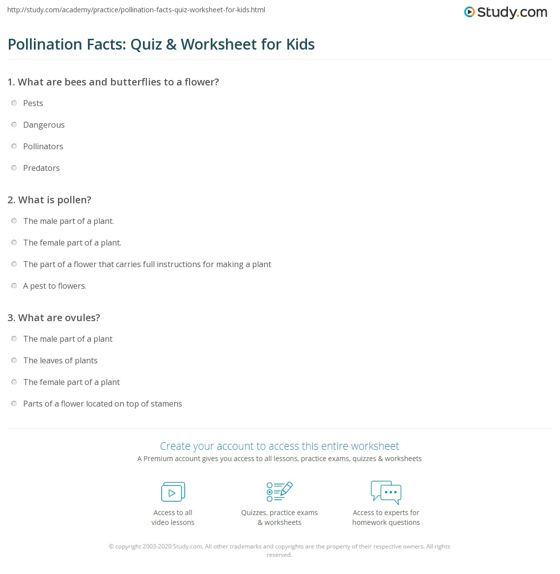 Pollination Facts Quiz Amp Worksheet For Kids