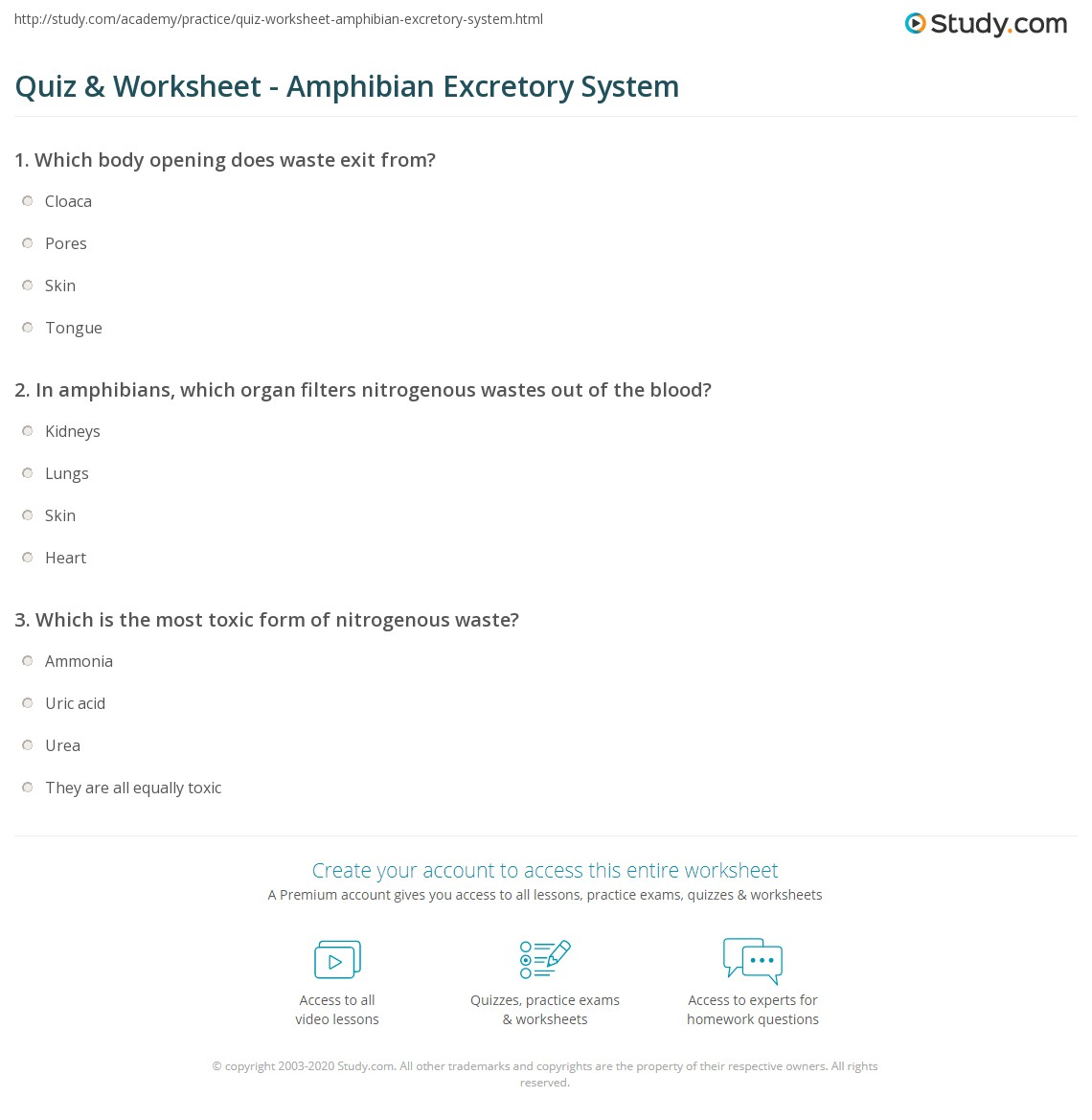 Worksheet All About Amphibians