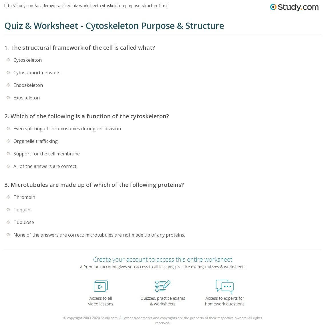 Chromosome Structure Worksheet