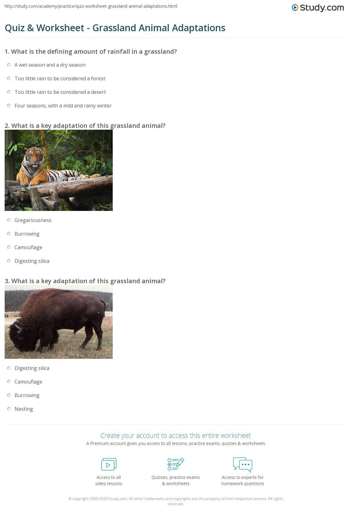 Worksheet Animal Adaptations Worksheet Worksheet Fun
