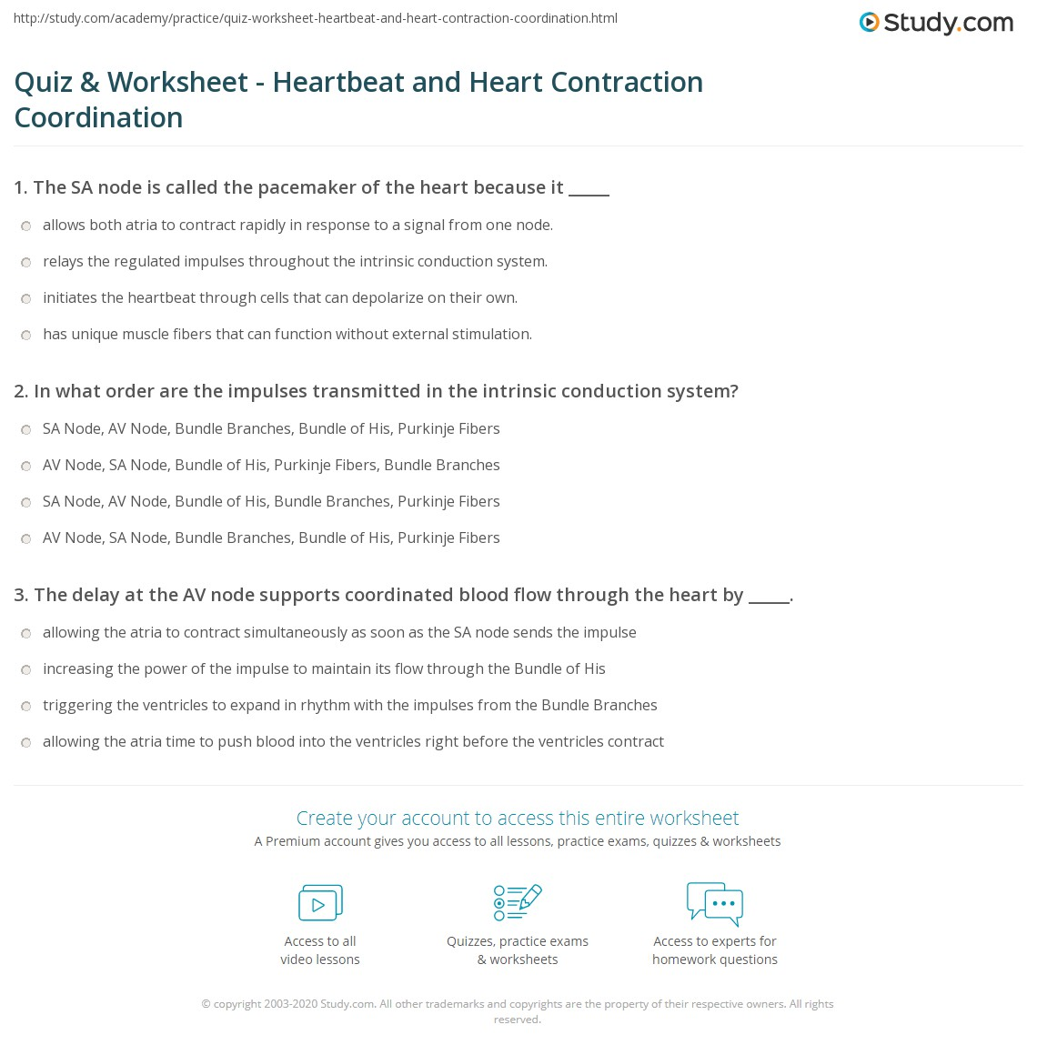 Quiz Worksheet Heartbeat And Heart Contraction