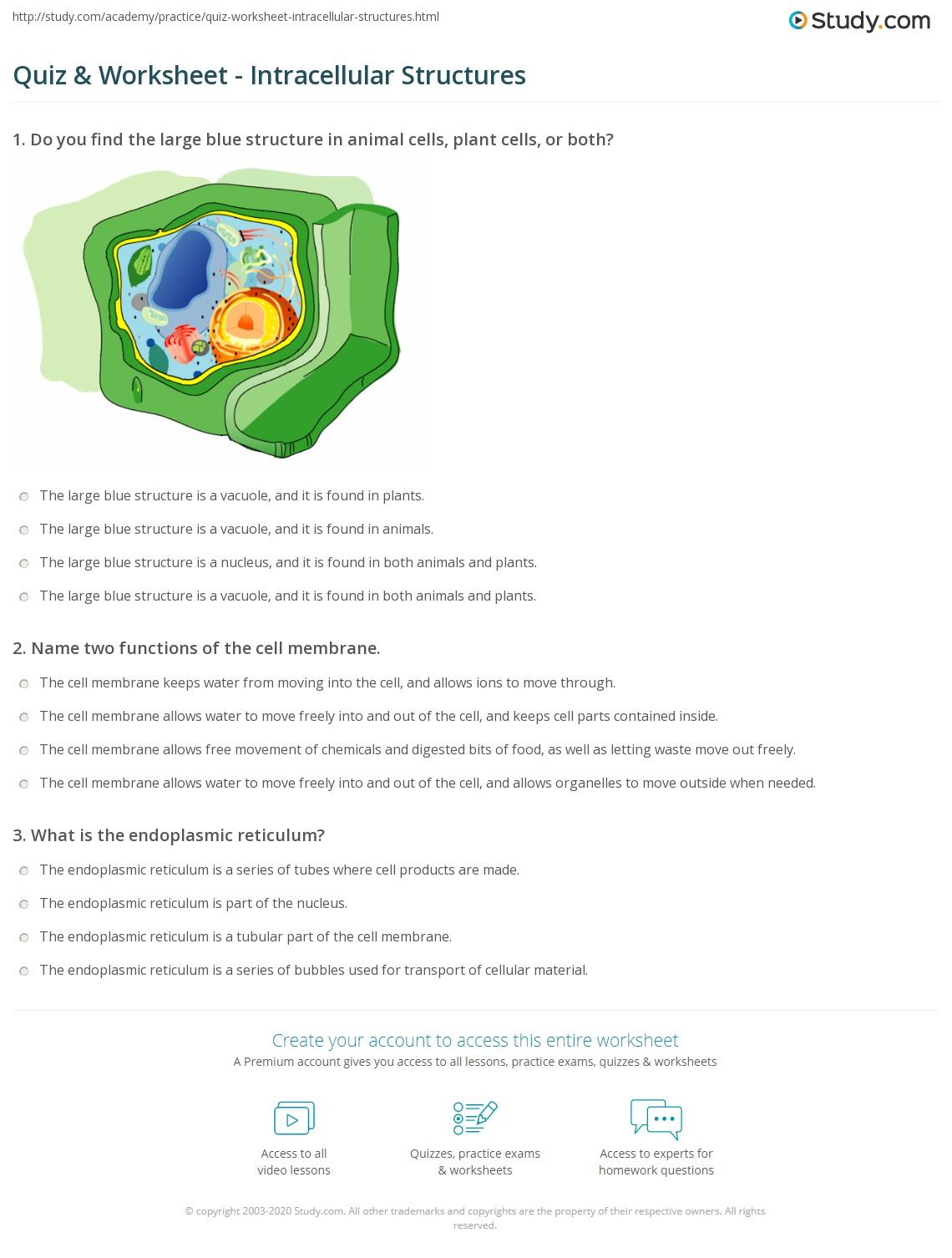 Membrane Function Worksheet