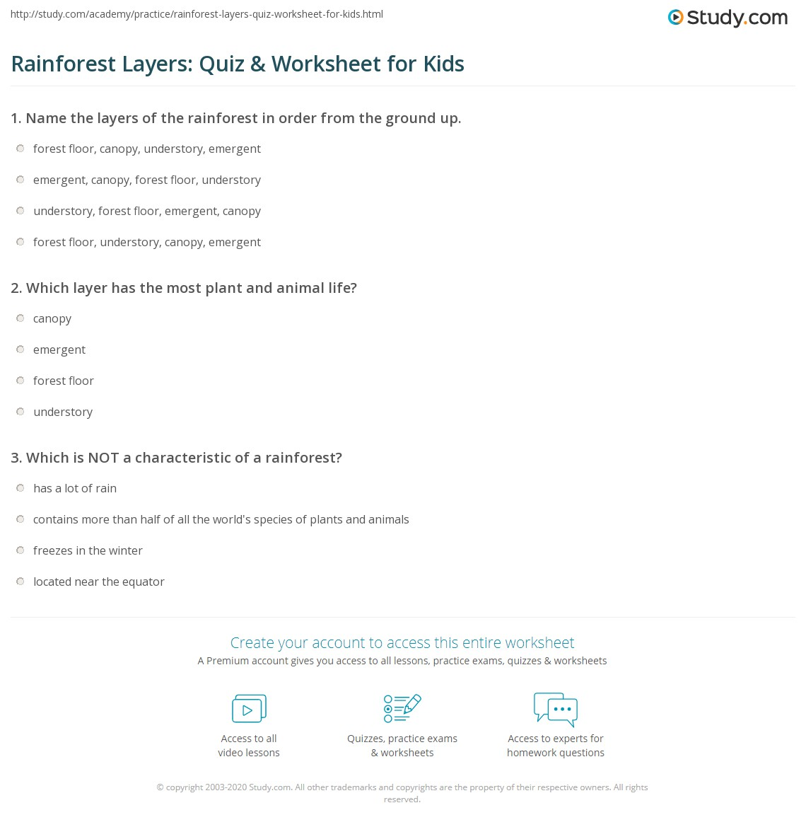 Rainforest Layers Quiz Amp Worksheet For Kids