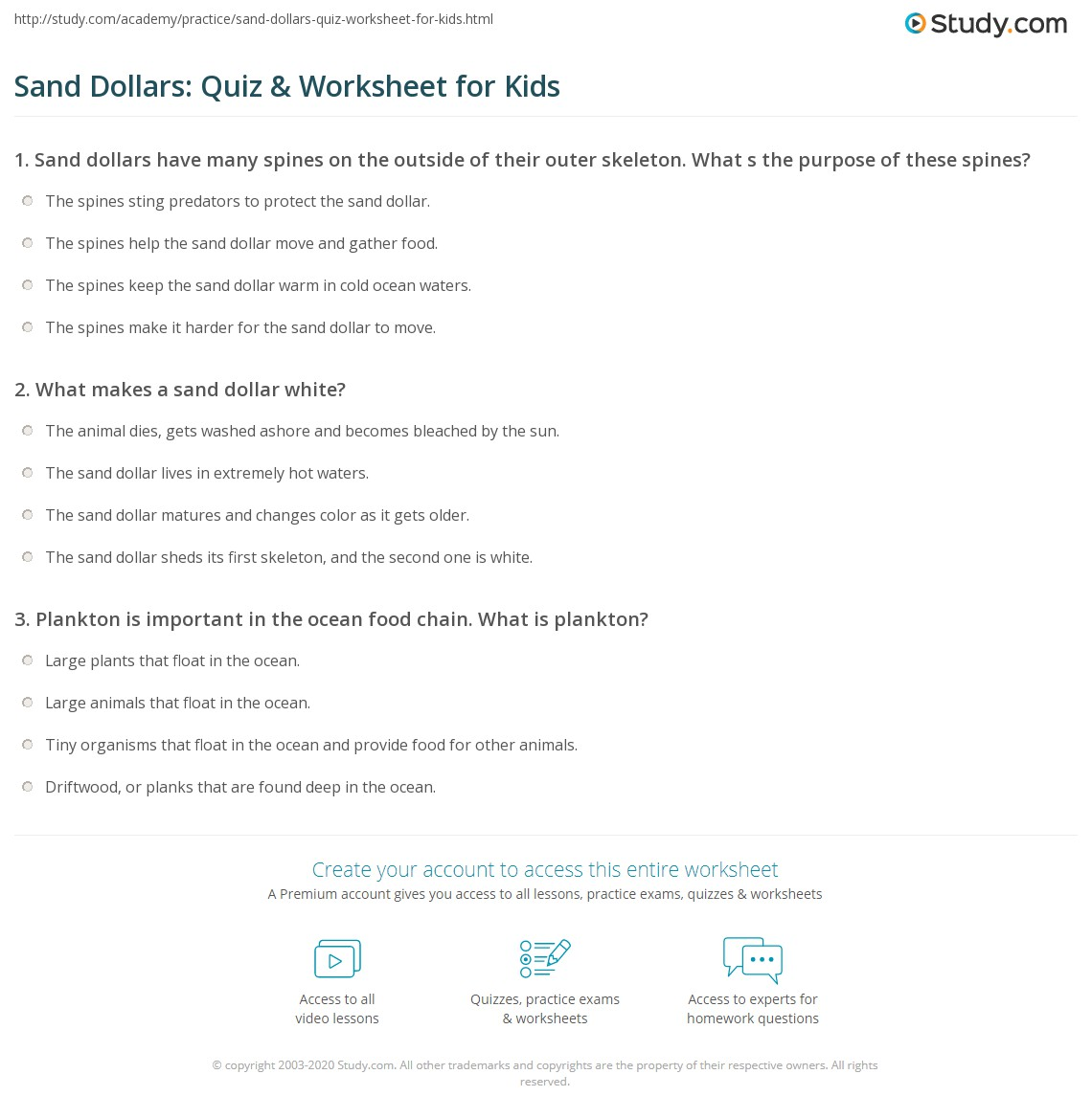 Sand Dollars Quiz Amp Worksheet For Kids