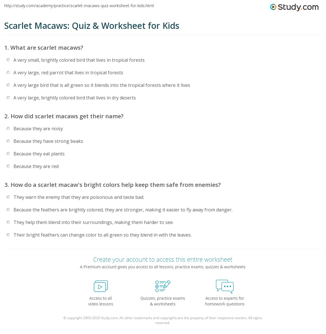 Scarlet Macaw Facts For Kids