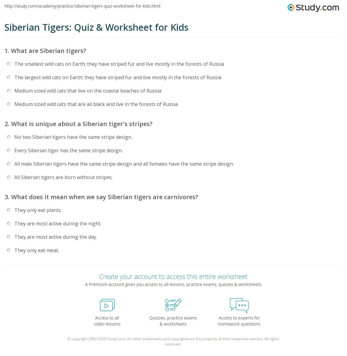 Siberian Tigers Quiz Amp Worksheet For Kids