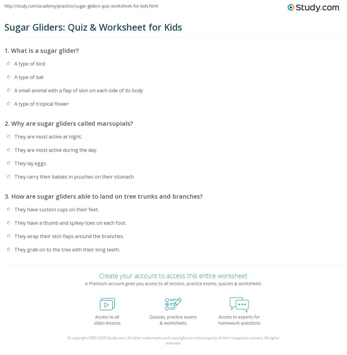Sugar Gliders Quiz Amp Worksheet For Kids