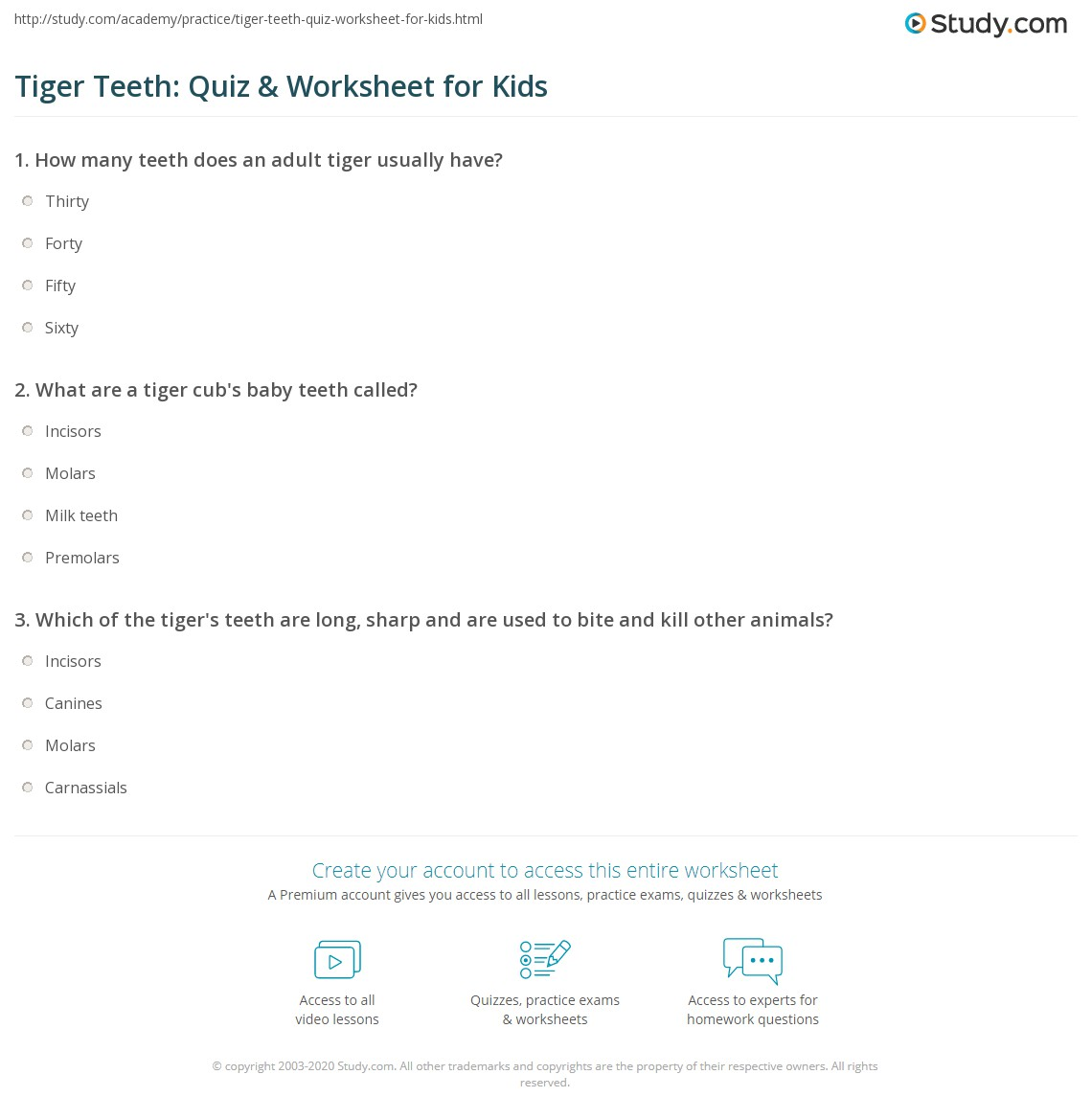 Tiger Teeth Quiz Amp Worksheet For Kids