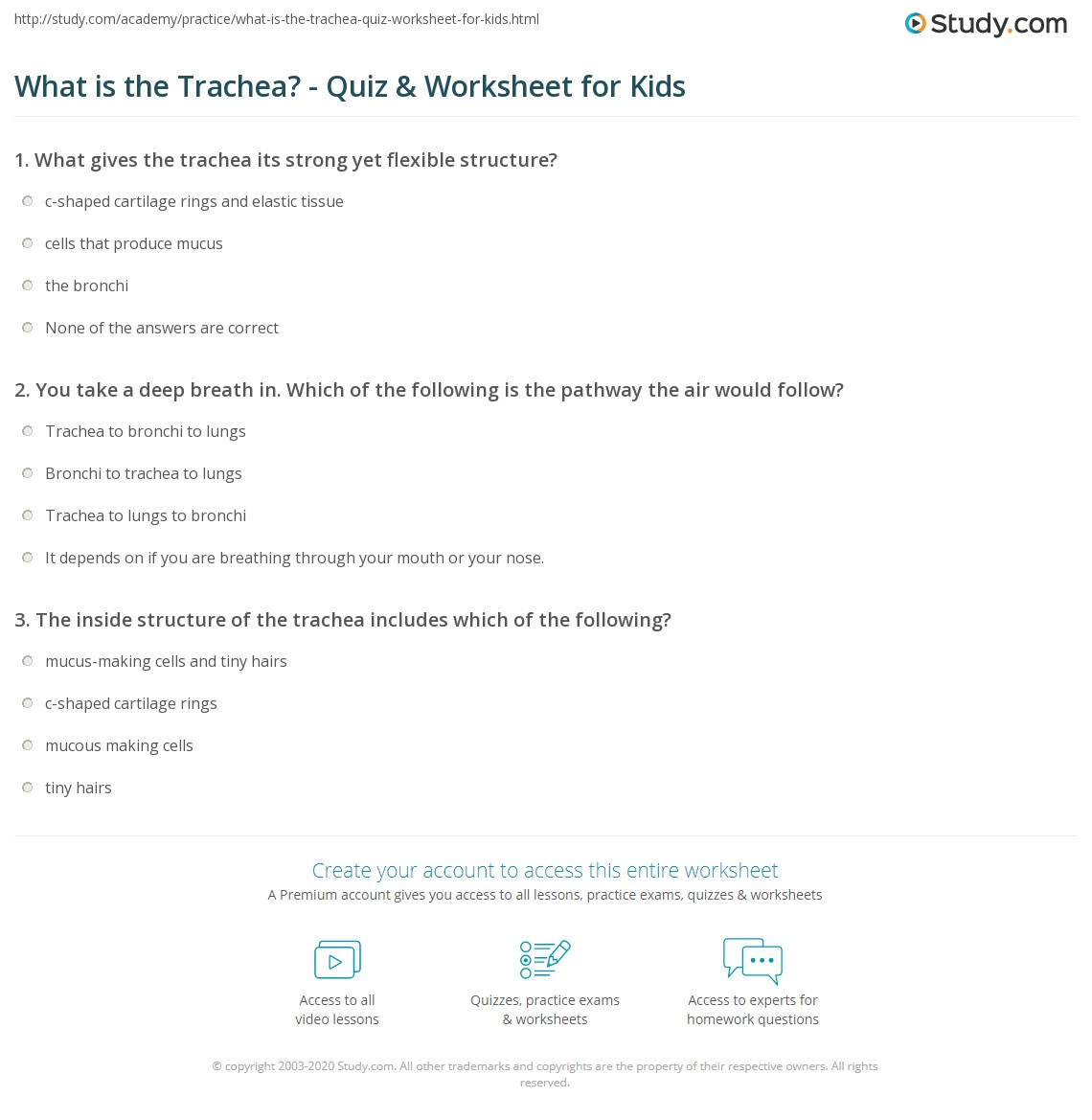 What Is The Trachea