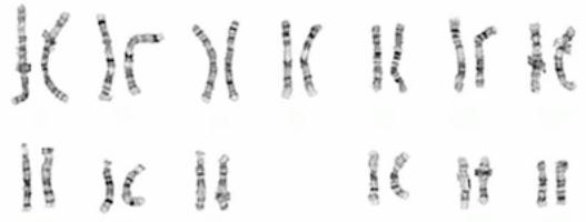Homologous Definition Characteristics Amp Structure