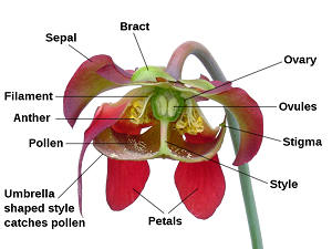 Flower Diagrams For Pollen Duster   Wiring Diagram