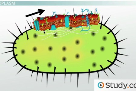 Pictures of bacterial cell full hd maps locations another world diagrams bacteria diagram newest bacterial cell structure diagram bacteria diagrams diagram of bacterial cells best of diagram a bacteria cell cool ccuart Image collections