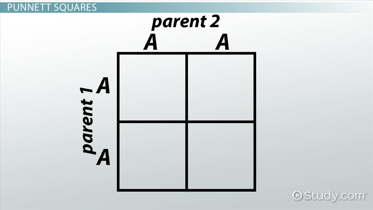 Genetics And Punnett Squares Getting Traits From Parents