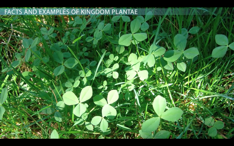 Kingdom Plantae Facts Characteristics Amp Examples
