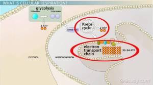 9 2 The Process Of Cellular Respiration Diagram  camizu