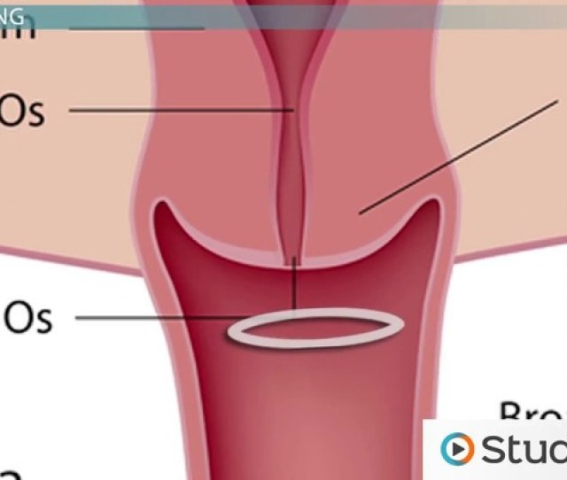 Hormonal Methods Of Contraception Contraceptive Patch Ring And Implants