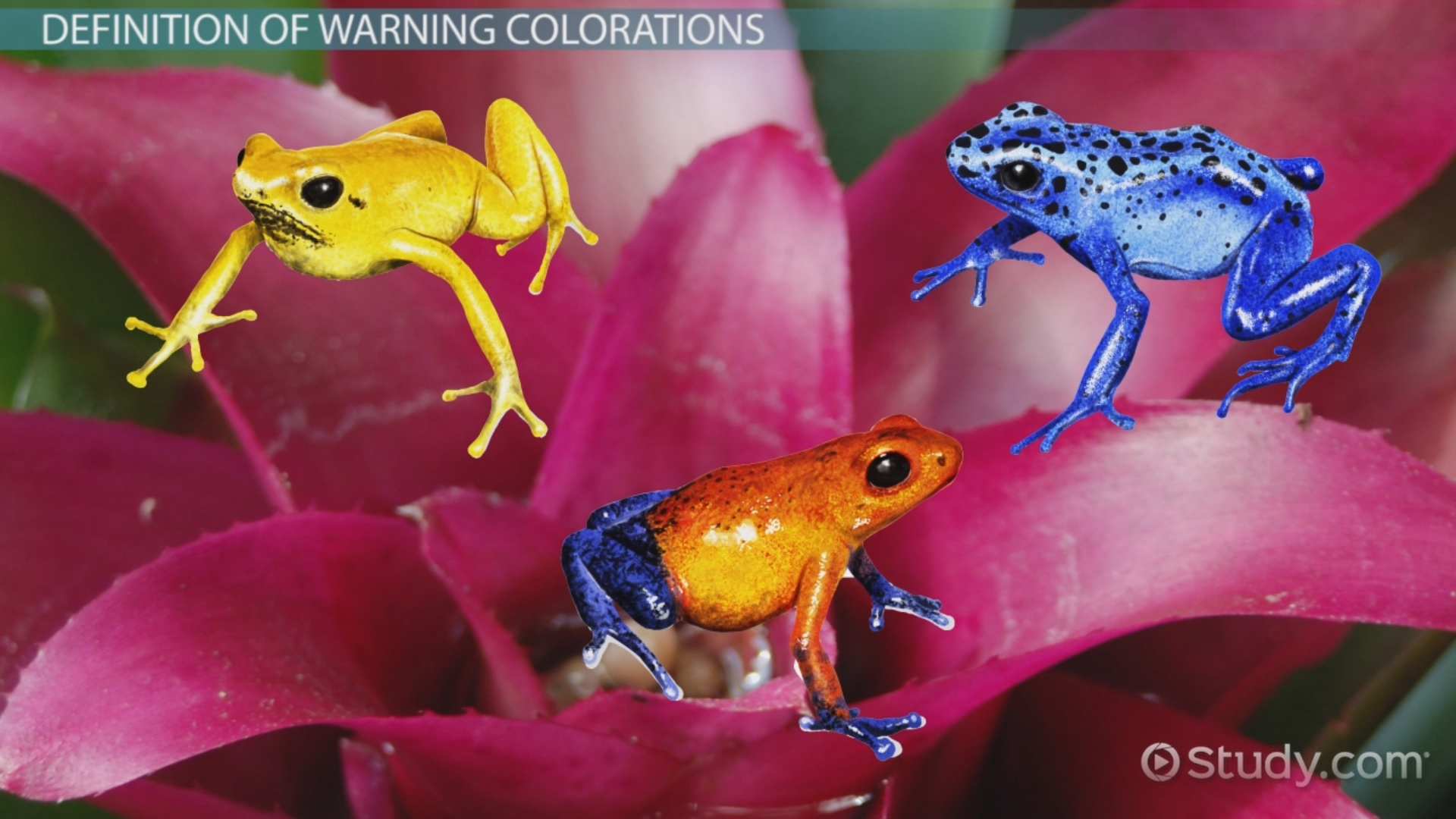 Warning Coloration In Animals Examples Overview