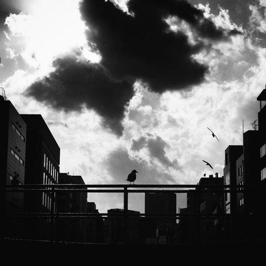 the SKY#tokyo #snapseed #iphone7plus #kandariver
