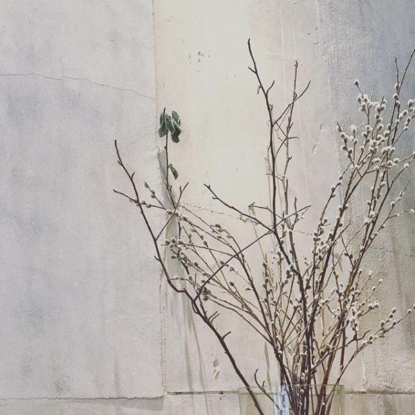 White Wall#iphone7plus #kitadeshokudo