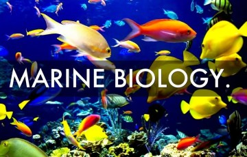 free online marine biology courses