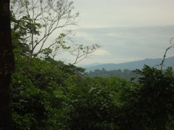 View from the lookout tower at the peak of the hike. If you look closely you can see the toucan in the tree