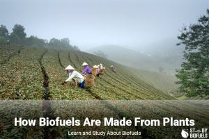 How biofuels are made from Plants
