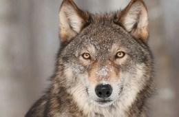 Everyone's Spirit Animal Should Be Cultural Sensitivity
