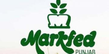 Appointment of Chartered Accountant firm as Statutory Auditor : MARKFED