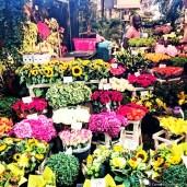 Bloemenmarkt, the Flower Market in Amsterdam. © Cornelia Kaufmann