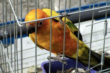 Conure Bird Cages
