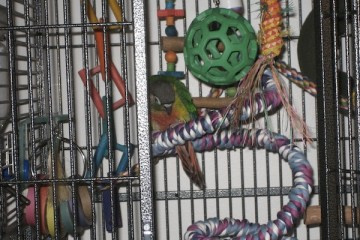 Parrot cages need to be big enough to accommodate toys