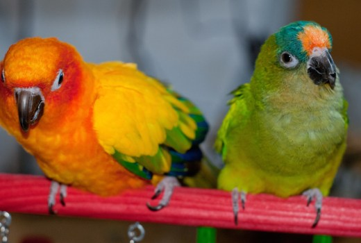There are many different types of conures