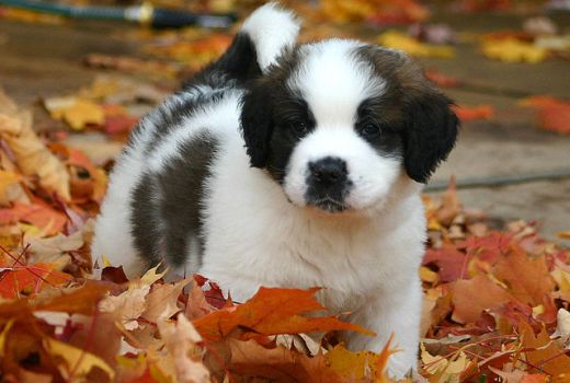 Choosing a puppy: Small or Large Breed?