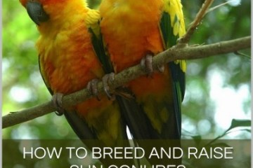 A pet owner's guide to breeding sun conures