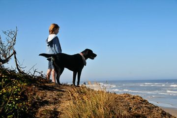Dog training tips to enhance the bond with your pet
