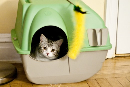 Litter box filled with organic kitty litter