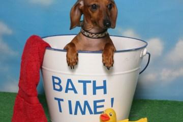 Bathing your dog