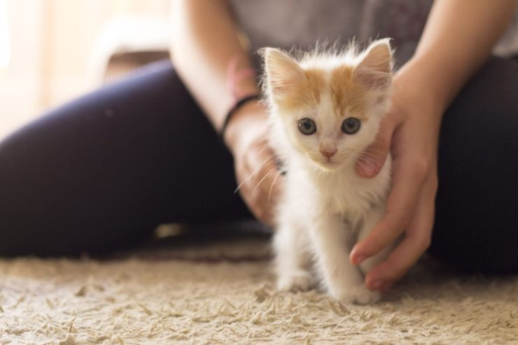 Create a Pet-friendly home when introducing new pets