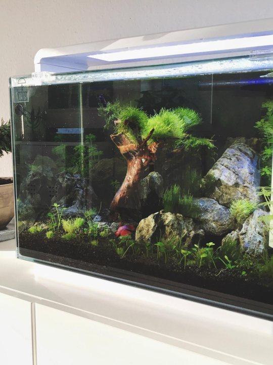 Superfish Home Design Aquarium