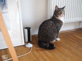 Canary Haustierüberwachung