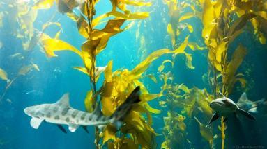 Under the sea at the Monterey Bay Aquarium
