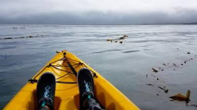 Top seat kayaking with Adventures by the Sea Cannery Row