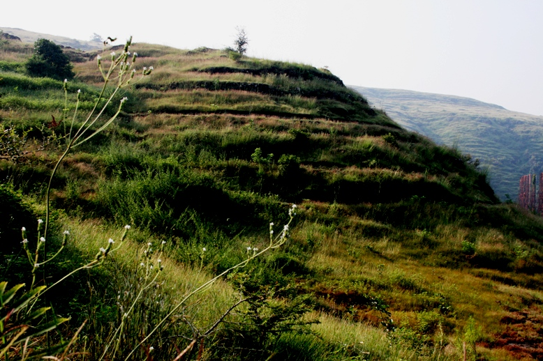 Plantation and contour trenches on Baner Hill, by the Clean Earth Movement