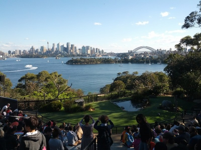 Living in Sydney Pros and Cons | Stuff It Go Travelling