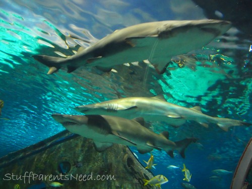 ripley's aquarium of the smokies 4