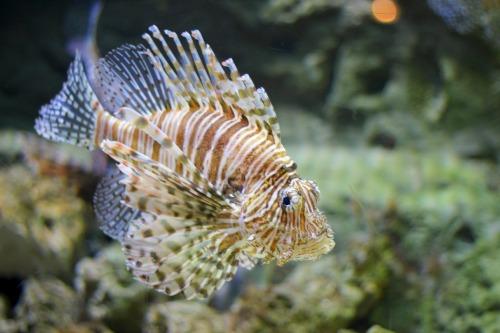 georgia aquarium review 7