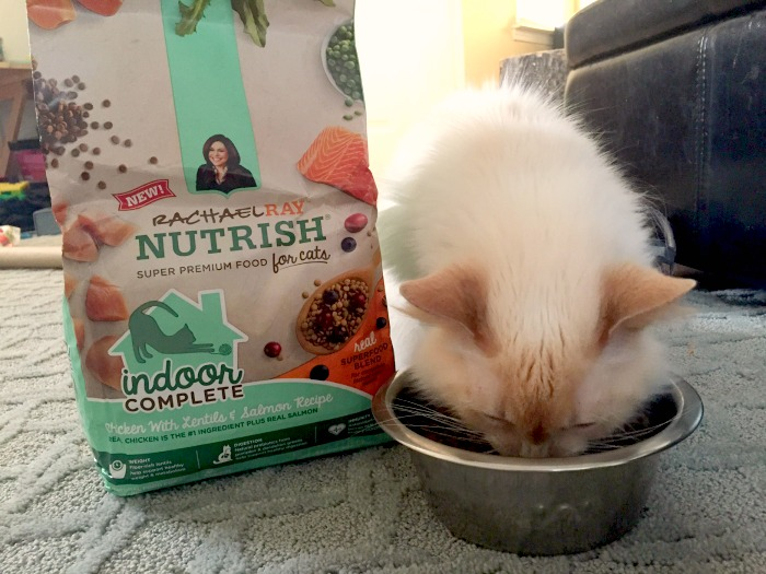 ginger eating rachael ray nutrish